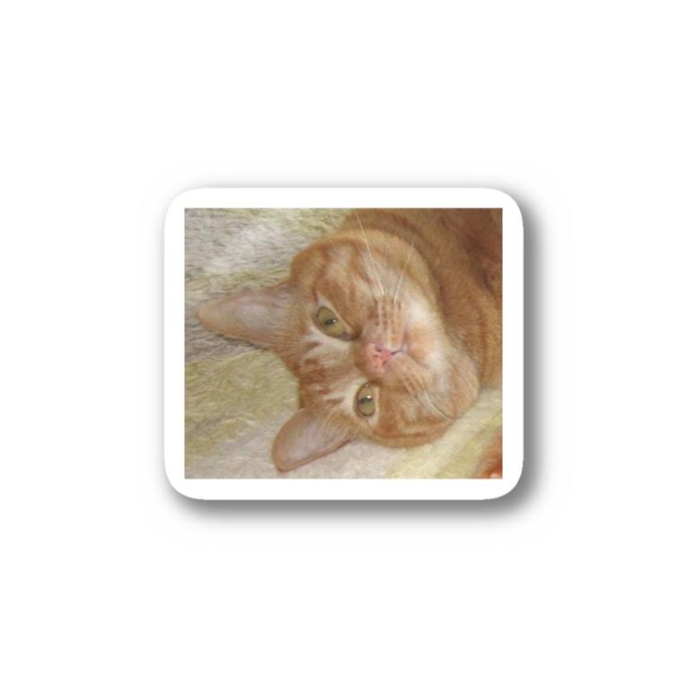 猫充商店のやばい顔しとる Stickers