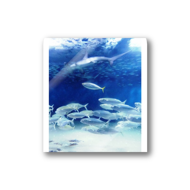 FUCHSGOLDの水中写真:シュモクザメと魚たち Hammerhead shark & fishes Stickers