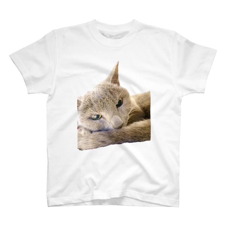 こはくさんとぺんぎんのこはくさん/アンニュイ写真 T-shirts