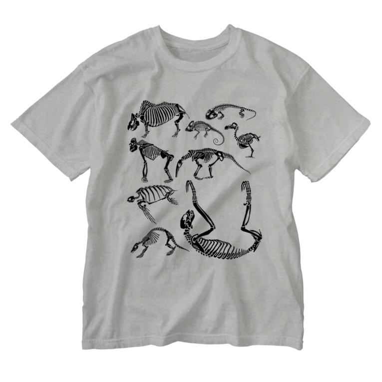 どうぶつのホネ、ときどきキョウリュウ。のWonder room ナマケモノの棚 Washed T-shirts