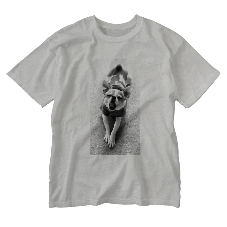 akane_artのモノクロチワワ(あくび) Washed T-shirts