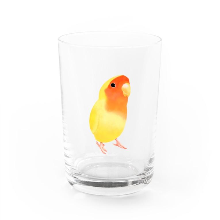 まめるりはことりのコザクラインコ おすましルチノー【まめるりはことり】 Water Glass